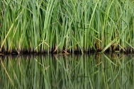 An alternative approach to reed bed design